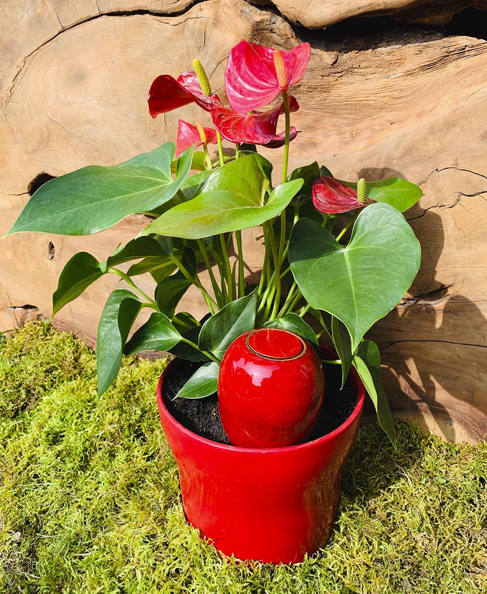 Arrosage Pour Plantes En Pot oyas, poteries arrosage, jarre arrosage, pots à enterrer